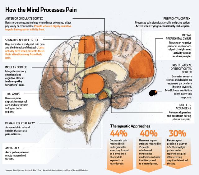 How_Brain_Processes_Pain